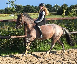Ponys Reiten lernen Hof Reil in Wardenburg bei Oldenburg