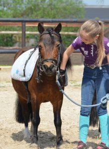 Pony Reiten Wardenburg Reil