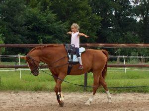 Reiten Reil Wardenburg Pony